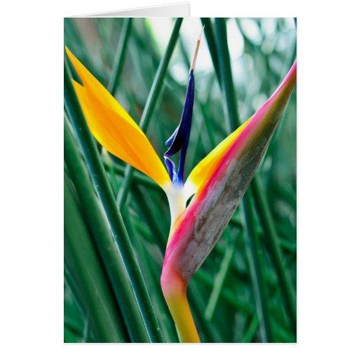 tarjeta de felicitación de la flor de la ave del p