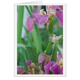 Tarjeta de felicitación de la flor del iris