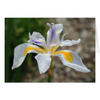 Tarjeta de felicitación de la flor del iris de la