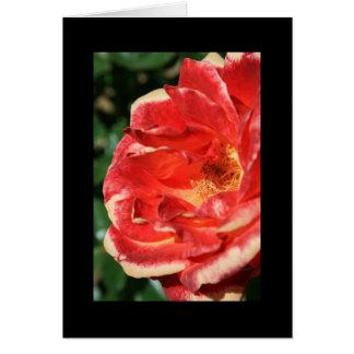 Tarjeta de felicitación de la flor del rosa rojo y