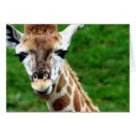 Tarjeta de felicitación de la foto de la jirafa