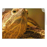 Tarjeta de felicitación de la foto de la tortuga