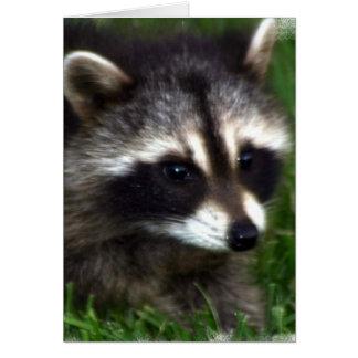 Tarjeta de felicitación de la foto del mapache