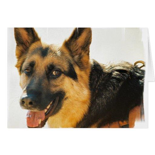 Tarjeta de felicitación de la foto del perro de pa