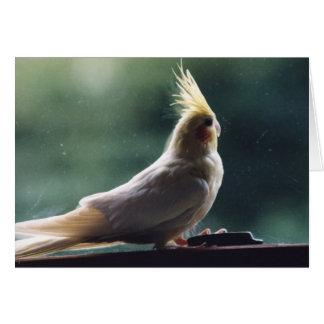 Tarjeta de felicitación de la fotografía del pájar