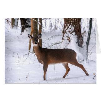 Tarjeta de felicitación de la gama del invierno