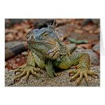 Tarjeta de felicitación de la iguana