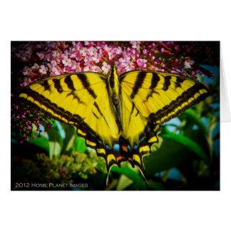 Tarjeta de felicitación de la mariposa de