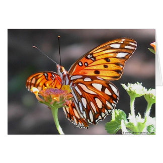Tarjeta de felicitación de la mariposa del Fritill