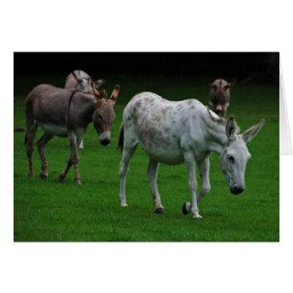 Tarjeta de felicitación de la mula y del burro