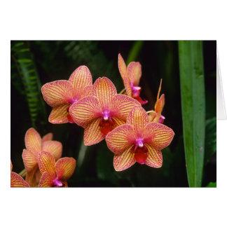 Tarjeta de felicitación de la orquídea