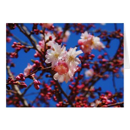 Tarjeta de felicitación de la primavera