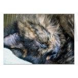 Tarjeta de felicitación de la siesta del gato