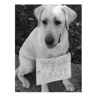 Tarjeta de felicitación de Labrador Postales