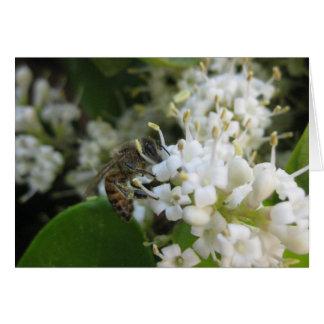Tarjeta de felicitación de las abejas ocupadas (1)