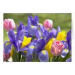 Tarjeta de felicitación de las flores de los tulip