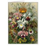 Tarjeta de felicitación de las orquídeas