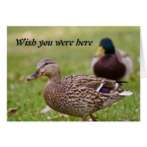 Tarjeta de felicitación de los amigos de los patos