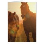 Tarjeta de felicitación de los caballos de la pues