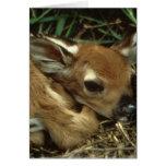 Tarjeta de felicitación de los ciervos del bebé