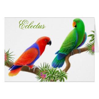 Tarjeta de felicitación de los pájaros de Eclectus