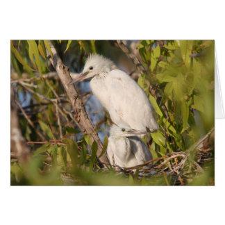 Tarjeta de felicitación de los pequeños Egrets