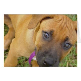 Tarjeta de felicitación de los perritos de Rhodesi