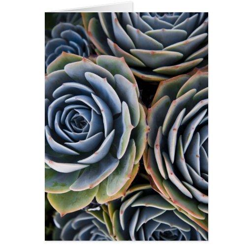 Tarjeta de felicitación de los Succulents