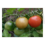 Tarjeta de felicitación de los tomates del semáfor