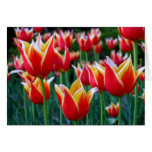 Tarjeta de felicitación de los tulipanes 3