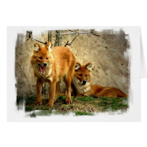 Tarjeta de felicitación de los zorros