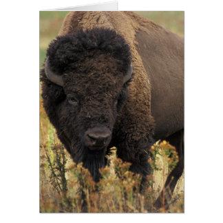 Tarjeta de felicitación de madera del bisonte