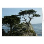 Tarjeta de felicitación de Monterey Cypress
