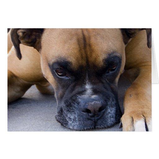 Tarjeta de felicitación de reclinación del perro d