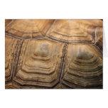 Tarjeta de felicitación de Shell de la tortuga