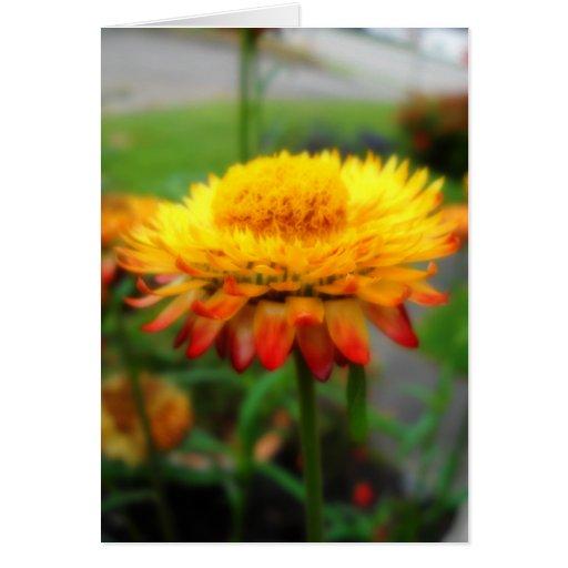 Tarjeta de felicitación de Strawflower