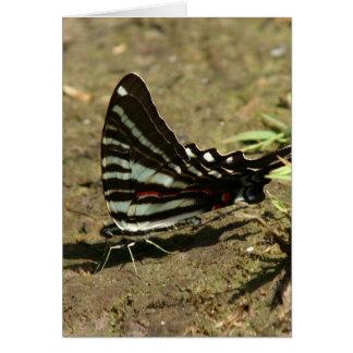Tarjeta de felicitación de Swallowtail de la cebra