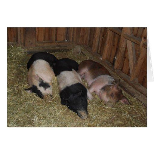 Tarjeta de felicitación de tres cerdos