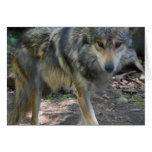 Tarjeta de felicitación de vagabundeo del lobo