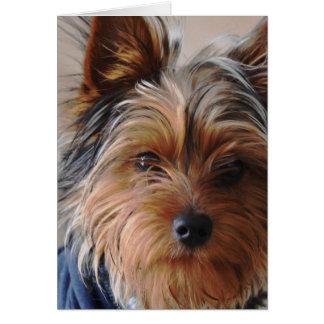 Tarjeta de felicitación de Yorkie Terrier