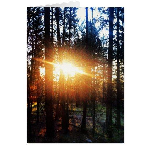 Tarjeta de felicitación del árbol de Sun