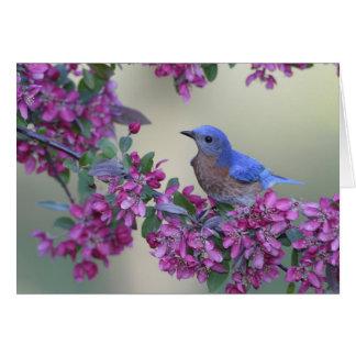 Tarjeta de felicitación del Bluebird