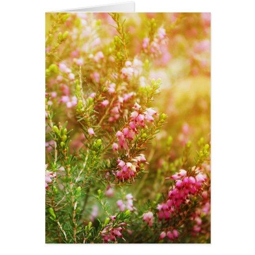 Tarjeta de felicitación del brezo púrpura