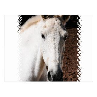 Tarjeta de felicitación del caballo de Lipizzaner Postal