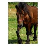 Tarjeta de felicitación del caballo de proyecto