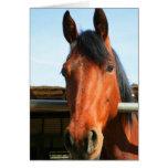 Tarjeta de felicitación del caballo del feliz cump