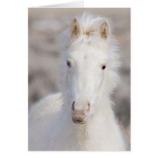 Tarjeta de felicitación del caballo salvaje del po