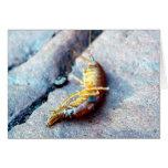 Tarjeta de felicitación del camarón del bebé