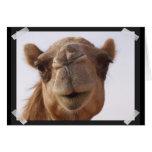Tarjeta de felicitación del camello