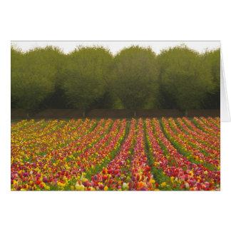 Tarjeta de felicitación del campo del tulipán